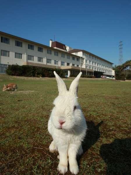 写真:休暇村 大久野島