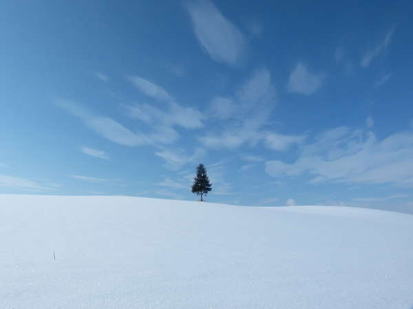 写真:ペンション 木のうた
