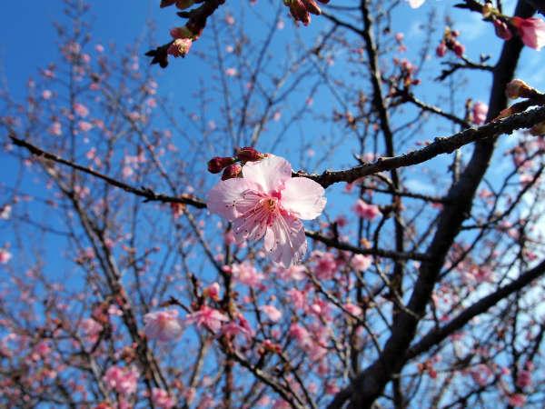 北郷 音色香の季 合歓のはな 写真