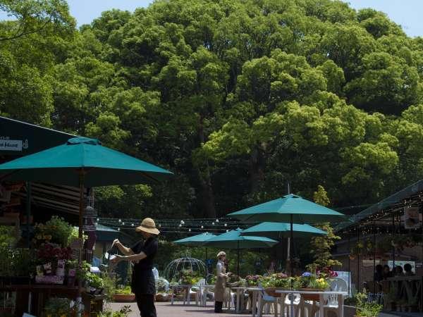 Slow Resort ぶどうの樹 『杜の七種』
