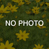 NO PHOTO