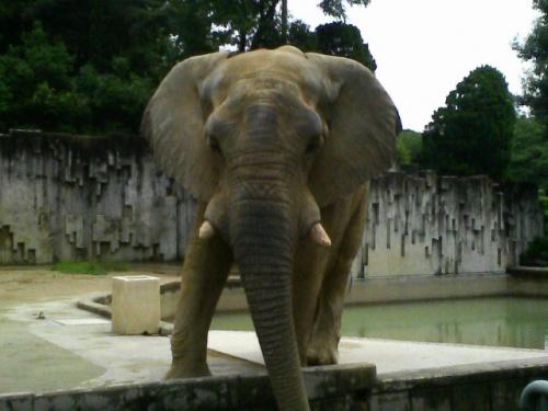 名古屋人にとって昔ながらの憩いスポットである「東山動植物園」へ行ってきました!<br /><br /> ☆ 旅のPhotoレポート : <br />  http://homepage3.nifty.com/bon_voyage/report.htm<br /> <br /> ☆ 管理人が泊まった!おすすめホテル・旅館 : <br />  http://homepage3.nifty.com/bon_voyage/osusume.html