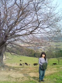 """★だいちゃんの妻=「千代?」の、穴場の""""一本桜""""開花の下見?・・・の旅。"""