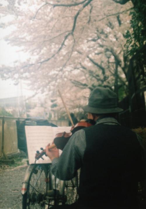 2年ぶりの桜撮影編