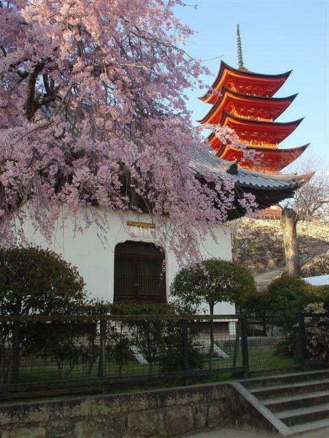 レッツ宮島「桜の鑑賞会」に参加する・・