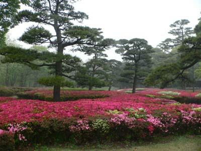 皇居東御苑は、かつての江戸城の本丸、二の丸、三の丸があったところで、日常、一般人に開放しています。<br /><br />中には、番所跡、天守閣跡(天主台のみ)、松の廊下、大奥跡など、たくさんの見所が。<br /><br />意外に知られていないようなのですが、皇居は四季の自然にあふれた日本情緒も沢山あります。ぜひ一度行かれることをお勧めします。<br /><br />皇居のすべてが、もっと市民が入りやすい場所にすればいいのに。