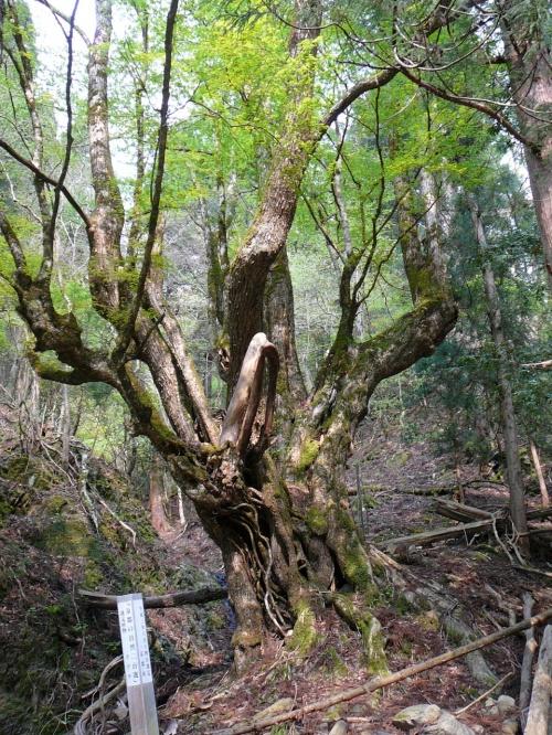 京丹波町散策:七色の木