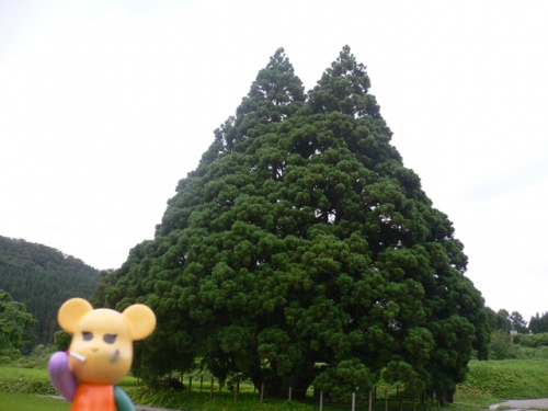『最後っ屁2』 トトロの木