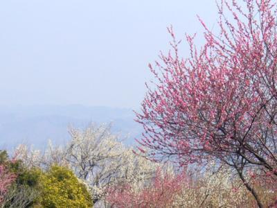 榛名梅林・・ポカポカ暖かくてもう春~♪