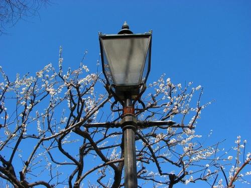 板橋美術館付近と梅花