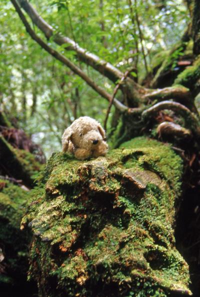 2003年の夏は屋久島に行ってきました。<br /><br />最終日は昨日お世話になったガイドさんに続けてお願いすることに。<br />安房川を見下ろせるスポットや紀元杉を案内してもらい、ヤクスギランドに寄ってから港に送ってもらいます。<br />今日は途中まで同じ宿のひとり旅のお嬢さんとも一緒です。<br /><br />ヤクスギランドは歩道が整備され、森も明るいので歩きやすかったです。<br />白谷雲水峡で鍛えたせいか(?)90分コースを歩きましたが、思ったより早く戻ってこれました。<br />そして屋久島ともお別れ。<br />午後のトッピーで鹿児島港へ渡り、飛行機に乗り継いだのでした。<br /><br />以下は今回の日程です。<br /><br />1日目:大川の滝とトローキの滝へ<br />2日目:白谷雲水峡トレッキング<br />3日目:ガイドさんの車で屋久島一周観光<br />4日目:ヤクスギランド散策<br /><br />大川の滝とトローキの滝編<br />http://4travel.jp/travelogue/10231245<br />白谷雲水峡編<br />http://4travel.jp/travelogue/10231247<br />島一周編<br />http://4travel.jp/travelogue/10231249