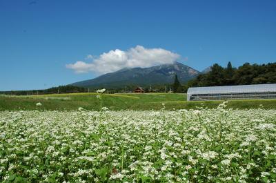 もうすぐ新蕎麦の季節。<br /><br />清里・八ヶ岳南麓は、お蕎麦屋さんのレベルが、かなり高いエリアです。<br />清里での田舎暮らし7年目の私が、お気に入りのお蕎麦屋さんをご紹介します。<br /><br />この旅行記は「清里高原ペンションオーナーのブログ」を再編集したものです。<br />http://blog.goo.ne.jp/silverbush/<br /><br />銀の森ホームページ<br />http://www.silver-bush.com/<br /><br />