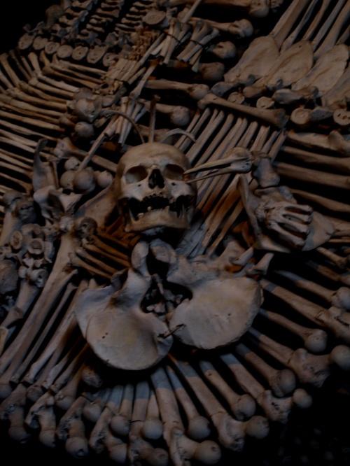 いきなり骸骨の写真ですみません・・・旅の始まりから膝を痛めてしまい、断念しようとしたクトナー・ホラ。<br />でも、墓地教会とダチツキービールは絶対クリアしたくて・・・やっぱ行ってきちゃいました♪<br /><br />4万人もの僧侶の骨で飾られた墓地教会・・・怖いかなぁって思ったけど、逆にその徹底ぶりに感動!!<br /><br />「メメント・モリ(死を思え)」命のはかなさ、重さ、尊さを忘れないように・・・<br /><br />墓地教会はセドレツにあり、旧市街からは徒歩30分。また膝を痛めてしまうので、セドレツから旧市街までは電車(1時間に1本、約3分)を使いました。<br />行きは電車、帰りは旧市街からバスに乗って・・・<br />バスや電車の時刻は下記で調べることができま~す。<br />http://jizdnirady.idnes.cz/vlakyautobusy/spojeni/<br /><br />プラハ本駅 7:53<br />   ↓電車<br />クトナー・ホラ本駅 8:56着 9:03発<br />   ↓電車<br />クトナー・ホラ・セドレツ 9:07着<br /> <墓地教会・聖母マリア教会まわって><br />クトナー・ホラ・セドレツ 10:16発<br />   ↓電車<br />クトナー・ホラ・ムニェスト 10:19着<br /> <ぐるっと旧市街><br />クトナー・ホラ バスターミナル 12:50発<br />   ↓バス<br />プラハ フローレンツ バスターミナル 14:15着<br /><br />プラハで、醸造所見学ツアー、マリオネット・・・やり残していることがたくさんあったので、クトナー・ホラでの滞在たった3~4時間。<br />だけど、行ってよかった、クトナー・ホラ!!<br /><br />[1日目] 成田⇒ヒースロー空港/ロンドン⇒ルズィニェ空港/プラハ<br />[2日目] プラハ<br />[3日目] プラハ⇒チェスキー・クルムロフ<br />[4日目] チェスキー・クルムロフ⇒テルチ<br />[5日目] テルチ⇒プラハ<br />[6日目] プラハ⇒★クトナー・ホラ⇒プラハ<br />[7日目] ルズィニェ空港/プラハ⇒ヒースロー空港/ロンドン<br />[8日目] ⇒成田<br /><br />[参考文献] 地球の歩き方/'08~'09 チェコ・ポーランド・スロヴァキア