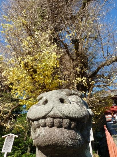 紅葉は盛りを過ぎた師走の鎌倉へ行ってきました。<br /><br /><br />