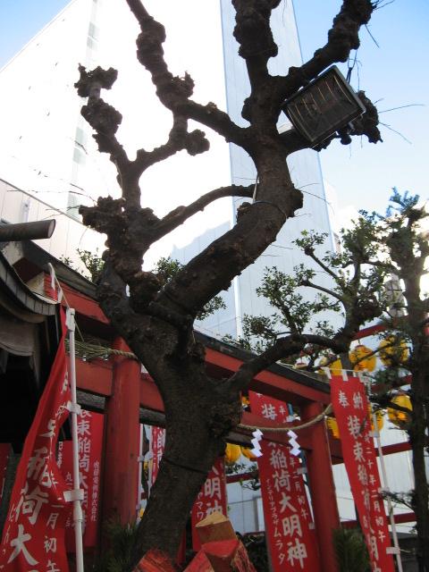 広重の浮世絵『王子装束ゑの木 大晦日の狐火』の世界が東京都北区王子で大晦日の夜再現されます。<br /><br />その昔、毎年大晦日になると、榎の下に狐が集まってきて装束を調えてから王子稲荷にお参りしたという言い伝えがありました。<br />その言い伝えと浮世絵をもとに、大晦日から新年を迎える伝承行事として王子では毎年「狐の行列」が行われています。<br /><br />除夜の鐘を合図に人が狐に化けて装束を調え装束稲荷を出発し王子稲荷神社まで狐たちが行列します。<br /><br /><br />夜になると写真を写せるかわからないので、昼間様子を見に行っ<br />てきました。<br /><br />表紙の写真は狐の行列のスタート地、装束稲荷と謂れのある榎(ゑの木)。<br /><br /><br />