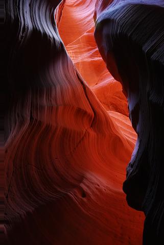 暫く前にある写真家の写真展で流れるような曲線模様の入った赤い岩の峡谷の写真を見た。あまりにも人工的な風景に「だいぶ(写真を)いじっているのかな。でもきれいだな」と気になっていた。その後、偶然このサイトで同様の写真を目にし、その場所がアンテロープ・キャニオン(Antelope Canyon)という場所だと知った。それ以来、一度行ってみたいと思っていた。<br /><br />Thanksgivingで4連休がとれたので急遽念願のアンテロープに行くことにした。<br />アンテロープの最寄り飛行場はPageという町にあるが、この飛行場のレンタカー屋が感謝祭でお休みだったため、Pageから車で3時間半ほどの場所にあるFlagstaffという町からアリゾナ入りすることにした。<br /><br />アンテロープは一般にUpperとLowerが知られている。いずれもナバホ族の居住区内にあり、Upperがガイド付きのツアーでないと入れない。Lowerは個人で行くこともできるが、何もない場所にあるため車でないと行けない。<br /><br />Upperに行くツアーは何社か扱っているが、そのうちの1社がCanyon Xツアーという他では扱っていない場所へのツアーを催行していることを知った。Overland Canyon Tours(ttp://www.overlandcanyon.com/Contact/contact.html)という会社で、exclusiveなツアーなだけあり、料金は高い。朝8時に集合して14時半頃まで、お昼代込みで160ドル。それでも他のツアー客がいないので写真が撮りやすいし、特別感に惹かれてこれに申し込むことにした。申し込みはメールで問い合わせを送ったところ、すぐに電話で連絡をしてくれた。<br /><br />アンテロープは峡谷のほぼ真上に太陽が昇ったときに生じる太陽光のスポットライトでも有名だが、これは5月から10月頭頃までしか見ることができない。したがって、私達は見ることができなかった。なお、このスポットライトはCanyon Xでも見ることができる。<br /><br />せっかくアリゾナくんだりまで行くので、グランド・キャニオン(GC)のSouth rimにも足を伸ばすことにした。<br />旅程は以下のとおり。<br />28日 午後2時頃Flagstaff到着 レンタカーでGCへ 公園内泊<br />29日 朝からPageに移動 Lower Antelope Canyon見学 Page泊<br />30日 Canyon X見学 GCに移動 公園内泊<br />31日 GCでMule Tour(ラバに乗ってグランドキャニオンを下るツアー) Flagstaffに移動して、夜の便でNYへ(NY着は翌朝)<br /><br />かなりの強行軍でした…<br /><br />グランドキャニオンの旅行記は以下をご参照。<br />http://4travel.jp/traveler/kum/album/10299374/<br /><br />【旅費】<br />宿、レンタカー及びガソリン代は下記の金額を友人と二人で割っています。飛行機 $669、Page宿(ツイン)$63、グランド・キャニオン宿(ツイン)(Maswik Lodge $92,Kachina Lodge $183)、ガソリン代$50くらい、レンタカー $425、Canyon X $160、Mule Tour $154。その他食費を入れて一人当たり$1500ちょいくらい。