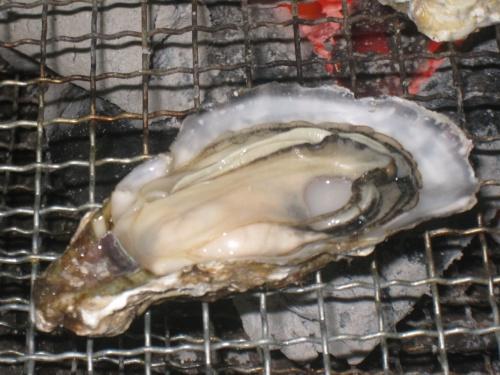 福岡から車で30分ほどの今宿に牡蠣を食べに行きました。<br />牡蠣は広島が有名ですが、福岡では西の糸島あたりが有名です。<br /><br /><br />着いたのが、昼どきということもありプレハブ小屋は、人でいっぱい!<br />大盛況です(@_@)<br /><br />炭火が用意された席にすわり、あとは、セルフサービスで殻付きの牡蠣を焼いていきます。<br />表面がカラッと乾いてきたら食べごろです(^_^)<br />お好みで醤油・ポン酢をかけていただきます。<br />おいしー!<br /><br />冬ならではのお楽しみです。<br /><br /><br /><br /><br /><br /><br />