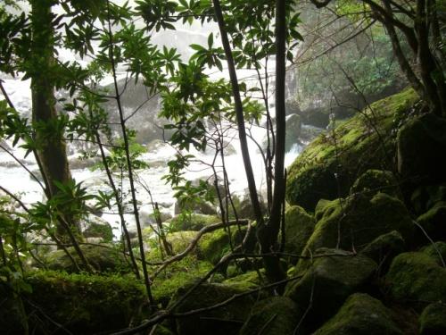 水のある風景  屋久島3日目