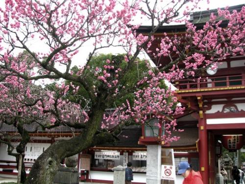 福岡に所用があり帰途、久しぶりに大宰府天満宮にお参りしてきました。