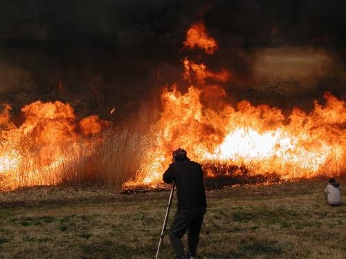 渡良瀬遊水地で野焼き