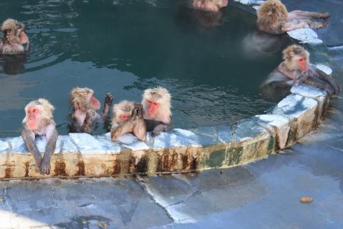 はるばる北へ~母娘好き勝手な旅【ラビスタ函館ベイ】朝風呂&美味しい朝食、お猿さんに会いたくて、湯の川温泉へ。