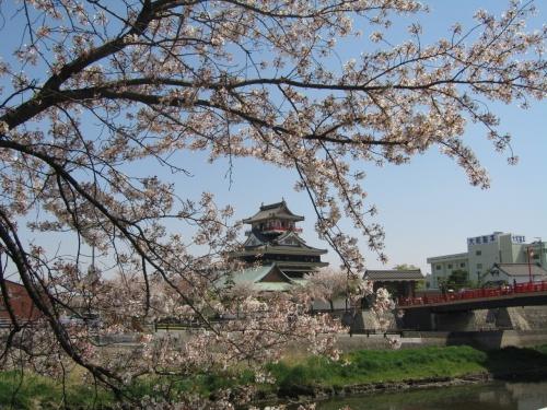 清洲城の桜