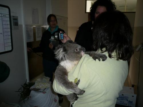 メルボルン、森林火災(Black Saturday)の影響を受けた動物保護施設&動物達