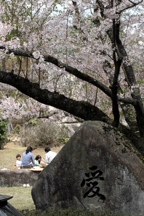 ひとり旅 [507] 神ノ倉山公園?<さくら景色の山頂公園を歩く>広島市安佐北区