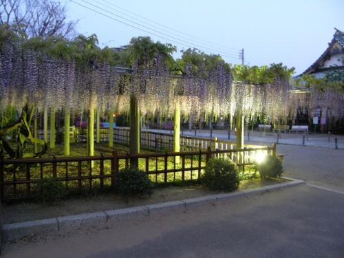 4月の祝日、千葉県の佐原と銚子へ行ってきました。<br />この旅行記は後半の銚子編です。<br /><br />本当なら、銚子に1泊して、ガイドブックで見た藤のライトアップを楽しみ、<br />そのほかに夕日や温泉も楽しみたかったのですが、日帰りで行きました。<br /><br />佐原と交えて、13:24に銚子駅に到着し、<br />帰りは19:38に銚子駅で電車に乗るという、<br />時間厳守のまさに弾丸トラベルを実践しました。<br /><br />下調べはあまりしなかったのですが、<br />とりあえず、行きたいと思った所をうまく回れました。