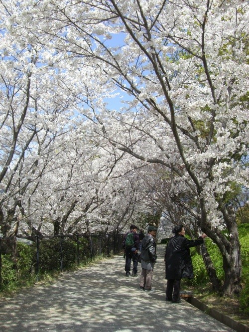 小城公園の桜鑑賞