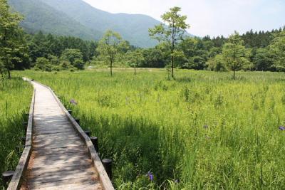 白馬村でバードウォッチング [2009](2) 姫川源流&親海湿原
