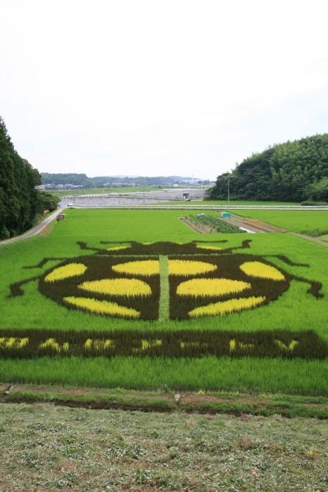 小さな旅●抹茶の里西尾 1・田んぼアート 2009