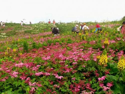 伊吹山のお花畑と箱館山のゆり園散策  2−1