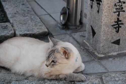 1泊2日で広島旅行。<br /><br />2日目はず~っと行ってみたかった尾道。<br /><br />いい街だったなぁ。<br /><br /><br /><br />ところで、私、ネコ好きだったっけ(笑)?<br /><br /><br />