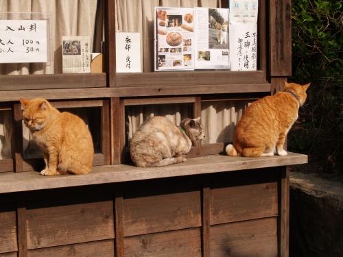 浄妙寺に早く着いたら、閉まっています。猫たちが三々五々に集まってきて券... 浄妙寺に早く着いた