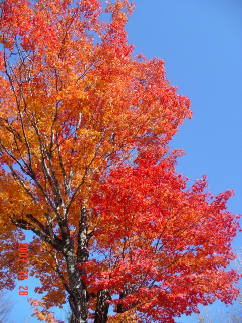 新穂高ロープウェイと紅葉