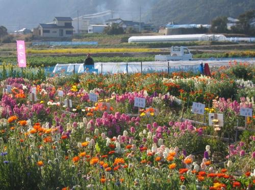 千葉県 房総の花畑 2007年2月
