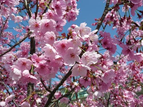 """""""春 真っ盛り サクラに癒され。。。今日は?歳のバースデー """""""