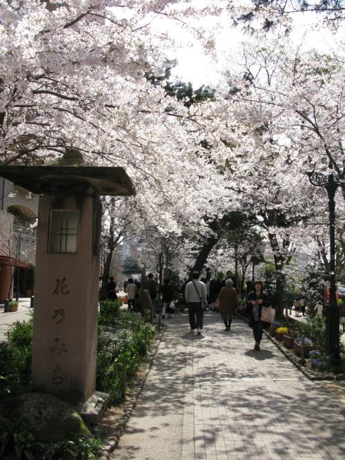 花のみち 桜が満開