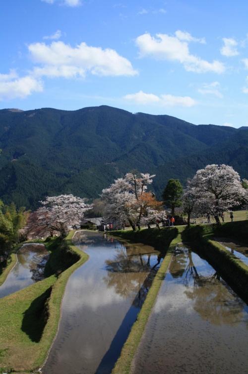 2010年 桜の頃に・・・【三多気のさくら】