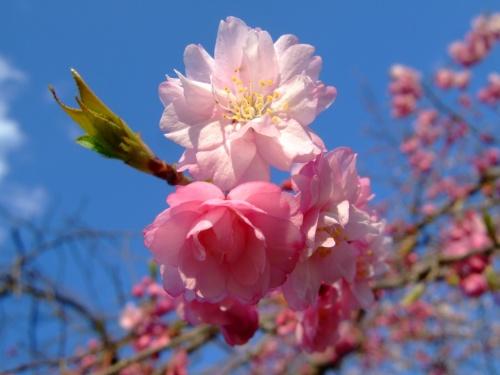 家族でお花見ツアー2010