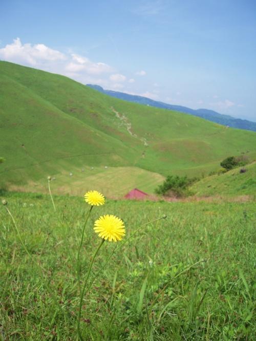 東伊豆/初夏の大室山でちょっぴりハイキング