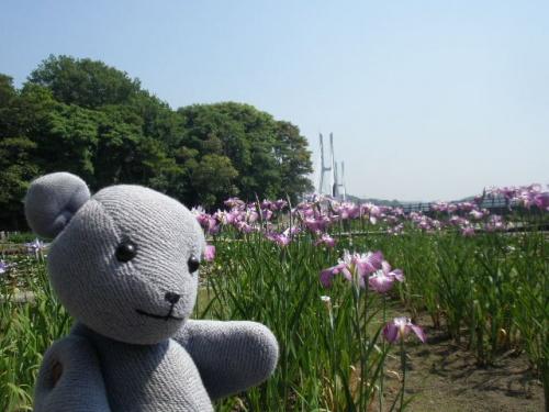 常盤公園を遊ぶ その1~花と鳥と魚編~