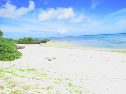 """ココは""""川平タバガー""""<br />石垣島の地図にも載ってない、地元の方御用達のシークレットビーチです。<br />よく撮影に使われるそうで、別名""""撮影場""""とも言う、とってもきれいなビーチでした(☆o☆)<br />石垣島の秘境です(*_*)アクセスが非常にわかり難いので、この旅行記ではアクセスポイントも撮って来ました。ご参考になれば、幸いです(^^;)。<br />ココはシュノーケリングにも最高!!<br />私の行った時は、おなじみのデバスズメダイやミスジリュウキュウスズメダイはもちろん、カクレクマノミの親子、ミツボシクロスズメダイの幼魚の群(キュート)、ミツボシクロスズメダイの成魚(かわいくない)、それにハゼとテッポウエビの共生をみることもできました。こうなるとダイビング並みですねo(^o^)o <br />なお、ビーチに向かう道路は未舗装で、車1台がようやく通れるくらいの細い悪路ですので、車で行くことはお薦めできません。<br /> """"シークレットビーチ""""ですから、売店や休憩所はもちろん、トイレもシャワーも、人為的に作られたモノは何もありません。あるのは、日本でもトップクラスの美しいビーチだけです。<br />この点を十分考慮して、出かけましょう(^-^)v<br />"""