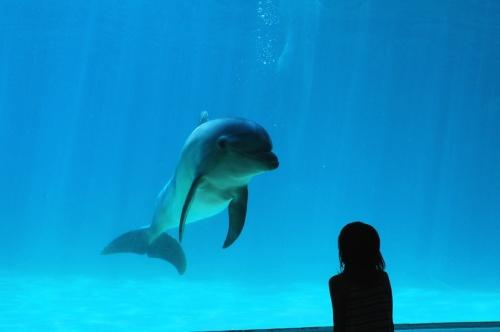 海の生き物に会いたい! 南知多ビーチランドへ