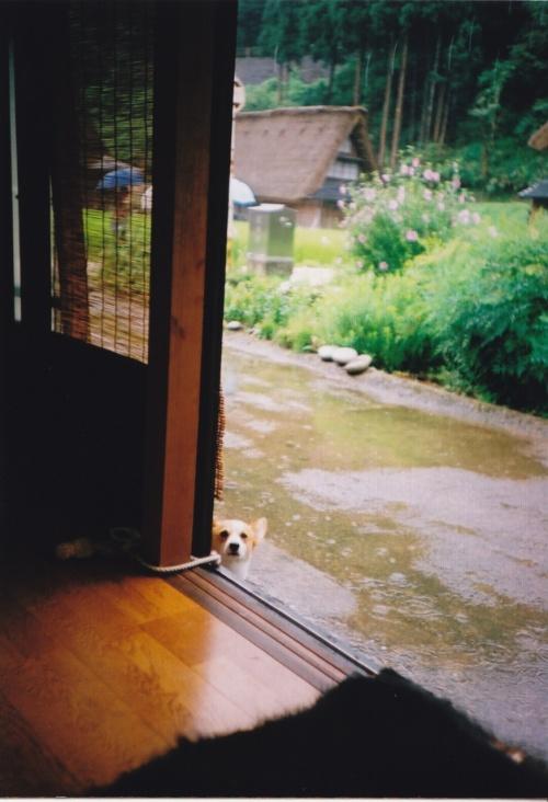 雨の五箇山 with Lomo LC-A