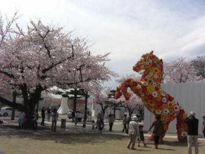 現代美術館と桜