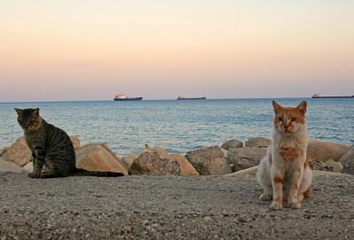 """***************************<br />2013/5/29追記<br />★キプロス共和国で撮った猫写真をグラビア4ページ掲載して頂きました!キプロスで出逢った猫の事、旅行エピソードなど稚拙ながら文章も全て書かせて頂きました。よかったら是非是非読んでやってください、よろしくお願いします<br />「ねこころ 2013年7月号」 /ケーズパブリッシング<br />http://item.rakuten.co.jp/neowing-r/neobk-1501115/?scid=af_pc_link_tbl&sc2id=251696621<br />***************************<br />キプロス共和国""""Republic of Cyprus""""<br />去年までキプロスが国である事すら知らなかった。<br />去年エミレーツ航空でドバイ乗り継ぎでマルタ共和国に行った際に<br />飛行機がさらに乗り継ぎの為必ず立ち寄るのがこのキプロス・ラルナカ空港だったのだがその時も「此処はいったい何処の国なのかな?」とか思ってた位。<br />そんなキプロス共和国に今年旅行する事を決めたきっかけは単純に言うと地中海の猫のDVDの中に収録されている国だったのと<br />""""猫がたくさんいそうだったから""""<br />猫がたくさんいる地中海の島なら正直何処でもよかった。<br />というわけで色んな国の組み合わせを模索したが今回はエミレーツ航空でスムーズに2カ国旅行できるマルタ島とキプロス島をめぐる事に決めた。<br />とはいえ今回キプロスでの滞在はわずか2泊3日<br />公共交通機関が極めて不便なのもあり極力移動は避けリマソール(レメソス)に1か所滞在する事に。<br />目的はとにかく時間の許す限り猫探しに徹する!<br />しかし毎度の事ながら到着初日から道に迷いまくり大幅ロスタイム!<br />果たして無事キプロス猫達にたくさん出会えたのかどうか気になる方はどうぞ本編を見ていってやってくださいませ〜<br /><br />※注意※この旅行記は観光名所より猫の写真が多いです、あしからず<br /><br />≪今回の旅行記一覧≫<br />2010/9/17<br />地中海猫探しの旅◎リマソール1日目CyprusCATSの歓迎◎<br />★今ご覧頂いてる旅行記です★<br />2010/9/18<br />地中海猫探しの旅◎リマソール2日目 憧れの猫修道院◎<br />http://4travel.jp/traveler/europeomu/album/10510206/<br />2010/9/18<br />地中海猫探しの旅◎リマソール2日目つづき 遺跡とかやっぱり猫とか◎http://4travel.jp/traveler/europeomu/album/10510210/<br />2010/9/19<br />地中海猫探しの旅◎Malta1日目 Sliema夜の公園猫探し◎<br />http://4travel.jp/traveler/europeomu/album/10511201/<br />2010/9/20<br />地中海猫探しの旅◎Malta2日目 ヴィットリオーザの街を歩く◎<br />http://4travel.jp/traveler/europeomu/album/10514140/<br />2010/9/20<br />地中海猫探しの旅◎Malta2日目つづき 猫大漁◎<br />http://4travel.jp/traveler/europeomu/album/10514149/<br /><br />◎旅フォトブログもやってます→「命みじかし旅せよ乙女」<br />http://omushimejitrip.blog71.fc2.com/<br /><br />◎◎youtube CyprusスライドショーUP!◎◎<br />【Cyprus Cats2010!】*注意 音出ます<br />http://youtu.be/vwPzp9DaH3g<br />"""