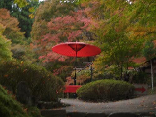 京都高尾清滝川の紅葉