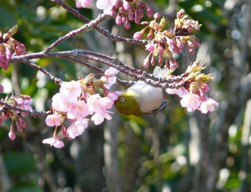 春が、すぐ近くにやって来そうな知多半島